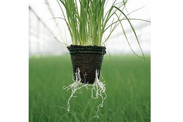 Vasetto di torba con pianta