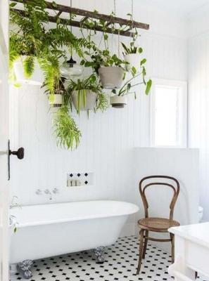 Le piante in bagno scendono dall'alto (foto: Conversazioni tra Orto e Giardino)