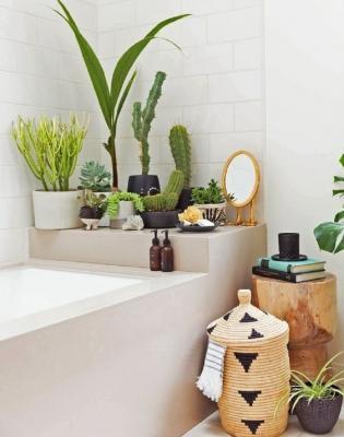 Piante in bagno le specie pi adatte - Piante in bagno ...