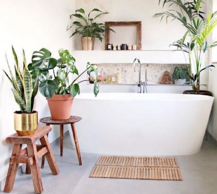 Piante in bagno: le specie più adatte