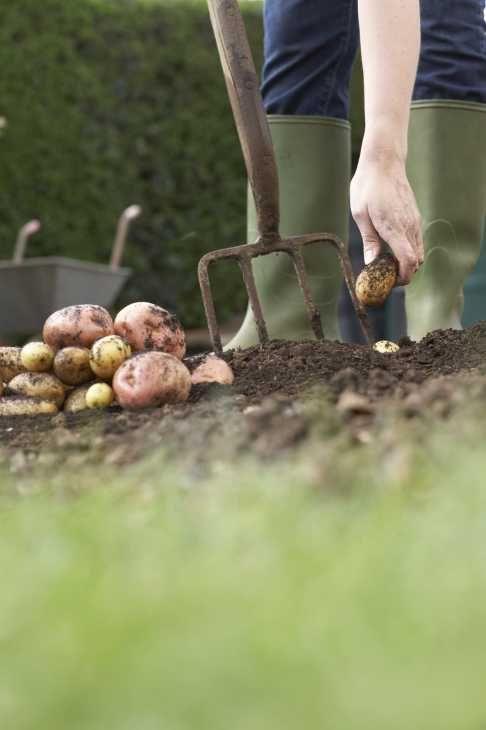 Piantare siepi in giardino
