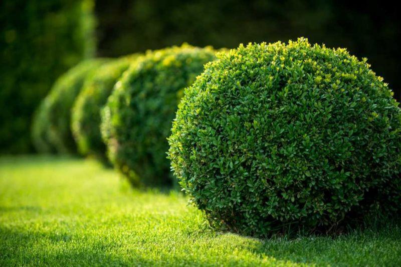Siepi Da Giardino Prezzi : Curare le siepi da giardino