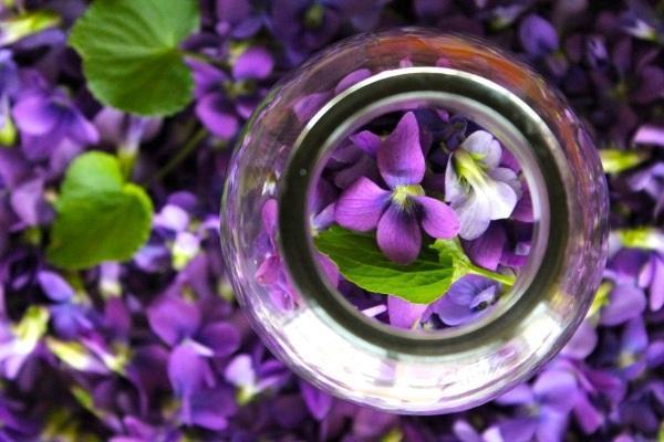 Petali di Viola Cornuta