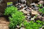 Giardino di rocce by Momo