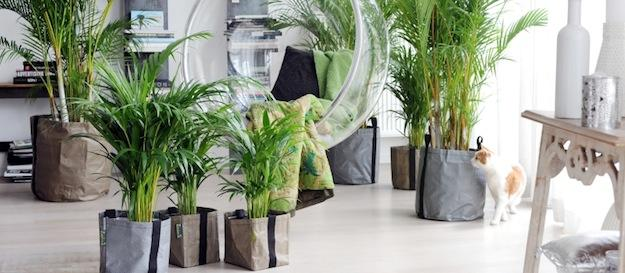 Le piante aiutano a realizzare una cucina Feng Shui