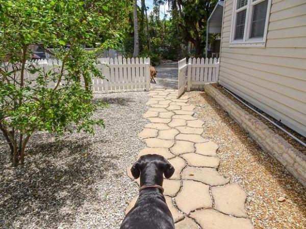 In condominio gli animali domestici: i migliori amici dell'uomo