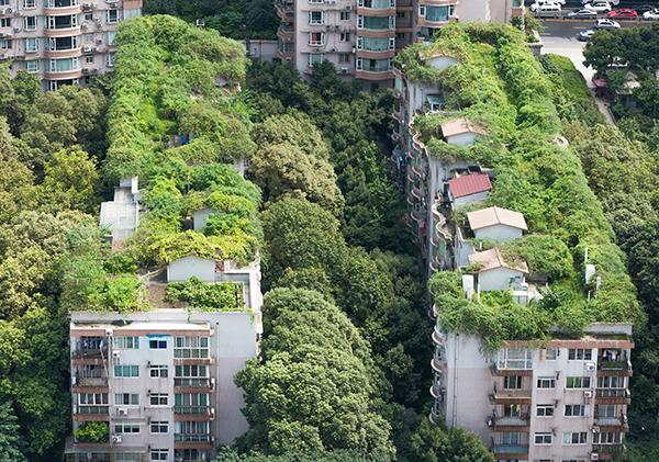 Tetti verdi e giardini pensili particolarmente rigogliosi