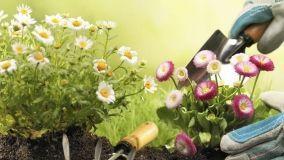 Sicurezza in giardino
