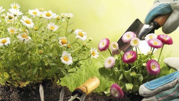 Accorgimenti per lavorare in giardino in piena sicurezza