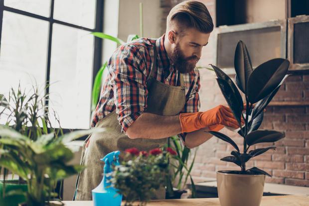 Curare le piante in giardino