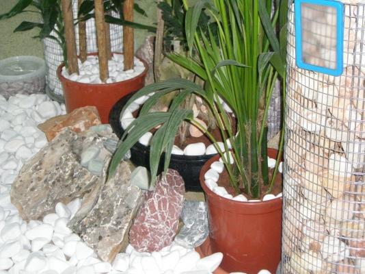 Ciottoli da giardino applicazione in vaso di Pietre Decorative