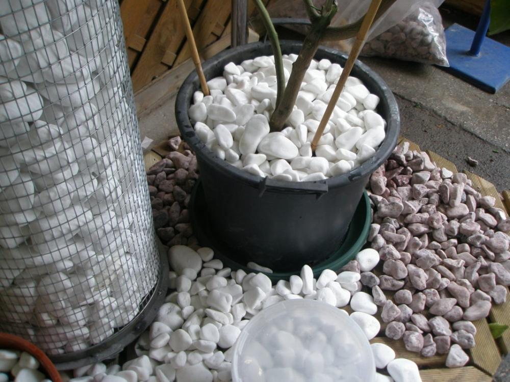 Ciottoli bianchi in vaso di Pietre Decorative