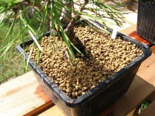Come prendersi cura di un bonsai - Cura dei bonsai in casa ...
