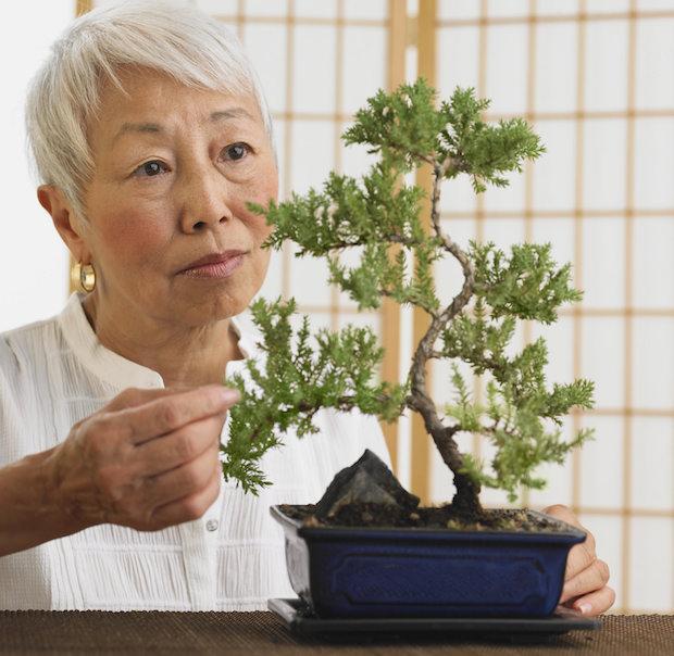 Bonsai, un'arte antica