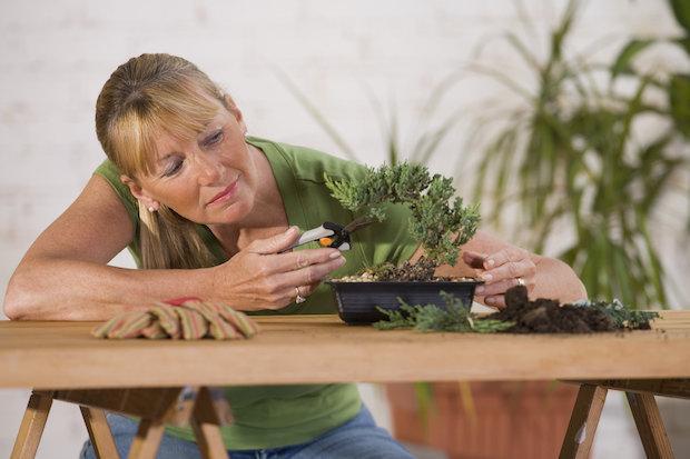 Potare il bonsai seguendo la forma della chioma