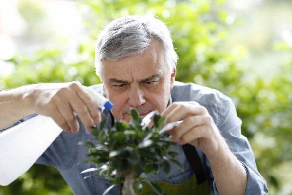 Dare acqua al bonsai con innaffiatore a spruzzo