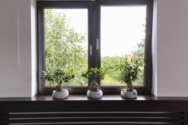 I bonsai da interno hanno bisogno di luce