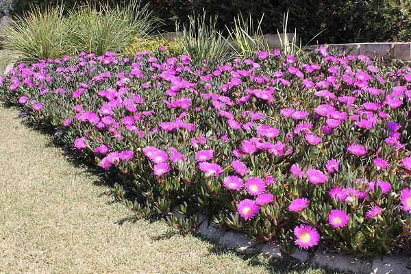 Piante tappezzanti per il giardino da bestplants.com