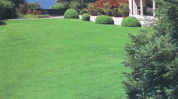 Progettare gli elementi che andranno a comporre il giardino insieme al prato verde