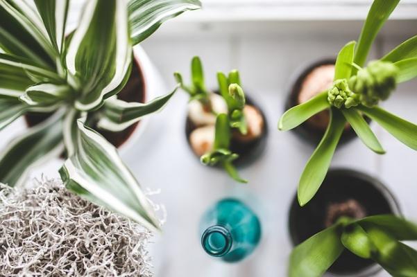 Le piante da appartamento infondono benessere