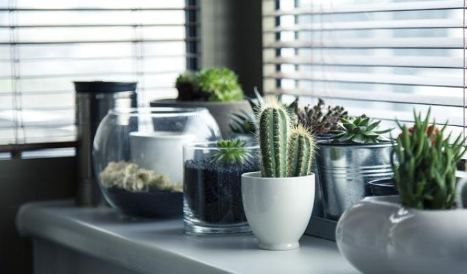 Le piante da interno andrebbero posizionate vicino alla finestra ma evitando la radizione diretta