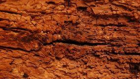 Tarlo del legno: come eliminare il problema