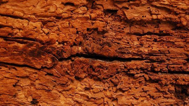 Come prevenire i danni da tarli a mobili e strutture in legno