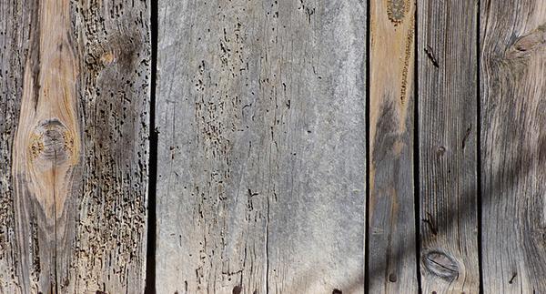 Vecchi fori di sfarfallamento e gallerie di tarli