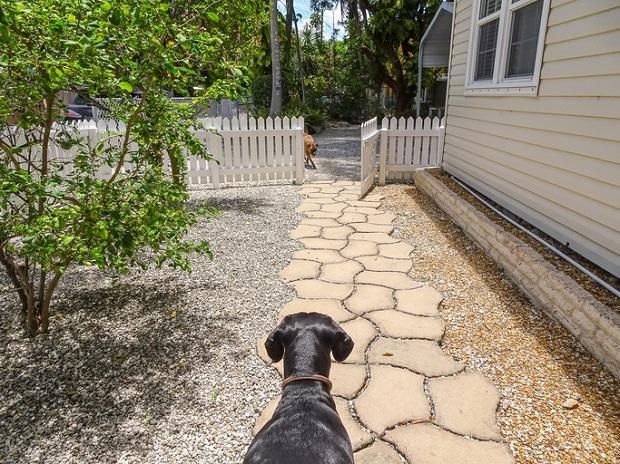 Cancello aperto e cane aggressivo