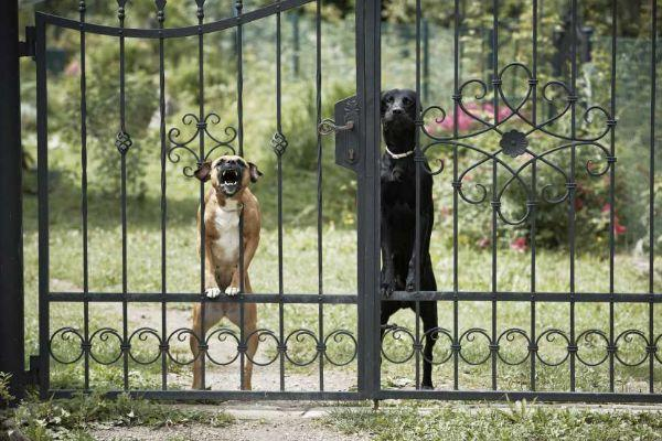 Cane, giardino e pericolo per i passanti