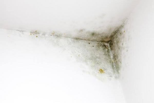 Come pitturare casa eliminando anche e prima la muffa