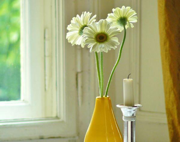 Gerbera in vaso