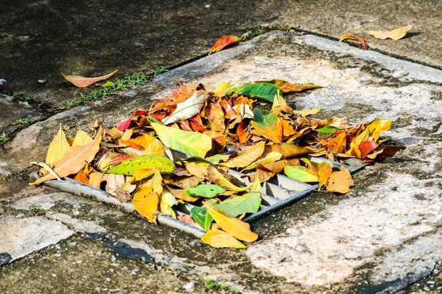 Tombino acqua piovana coperto da foglie