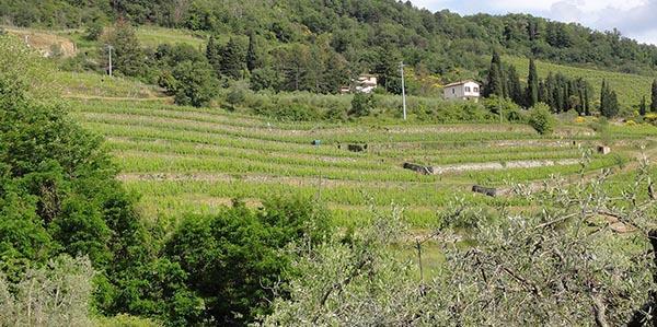 Coltivazioni a terrazza con muri a secco nel Chianti Fiorentino
