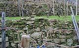 Particolare di un muro a secco di Dolceacqua in Liguria