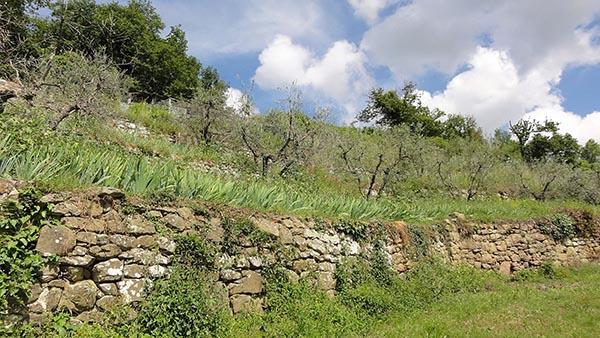 Terrazzamento con muretto a secco a Lamole nel Chianti fiorentino