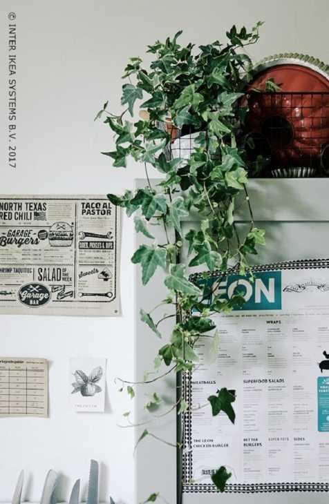 Un'altra pianta da interni è l'Hedera helix, da Ikea