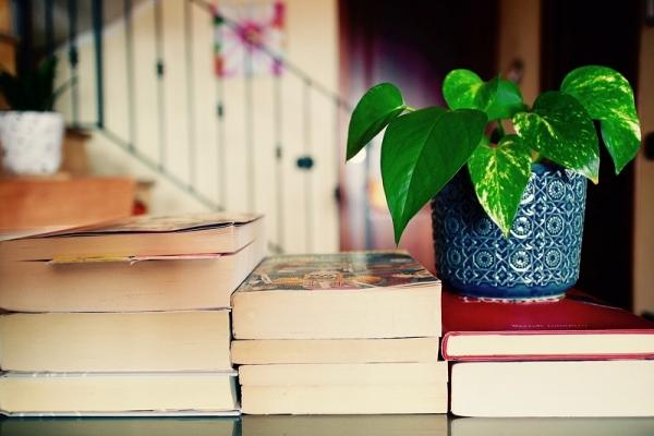 Piante verdi su una libreria