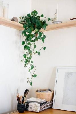 Il filodendro ricade dall'alto e adorna l'ingresso, da elmueble.com