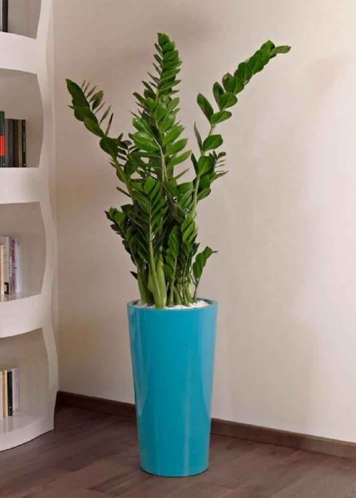 La zamia è un esemplare fiorito, da eurobplast.com