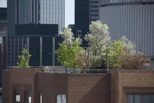 I giardini pensili migliorano l'estetica degli edifici