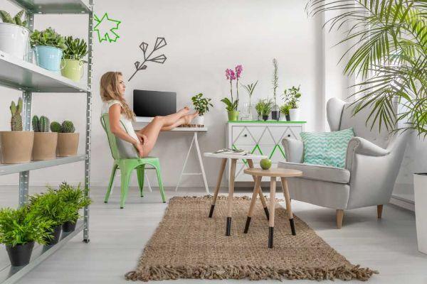 Le piante sono importanti per animare un angolo studio