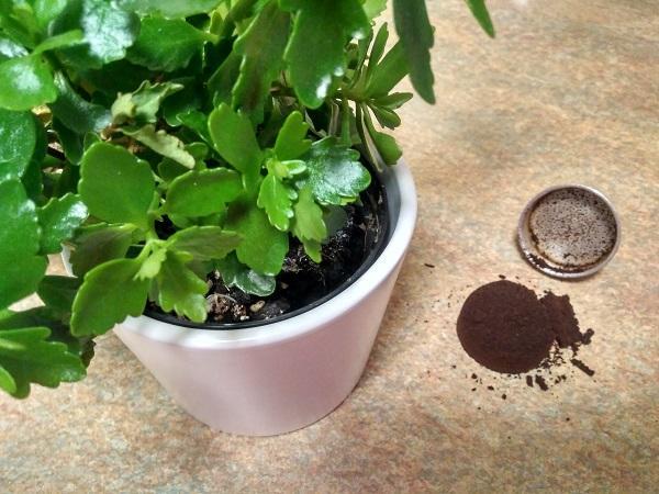 I fondi di caffè sono un valido fertilizzante