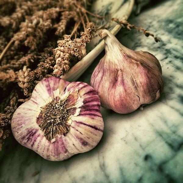 La coltivazione dell'aglio