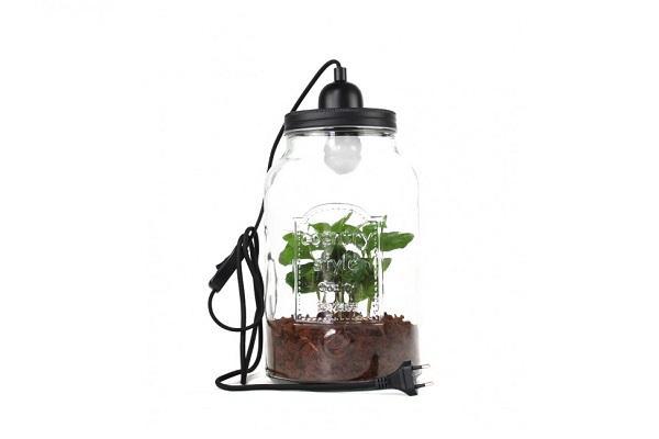 Pianta di caffè con lampada di Flobflower: un'idea per San Valentino