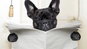 Animali in condominio: quali sono le regole da seguire