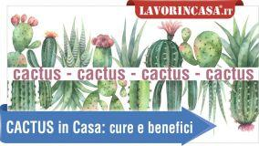 alt Cactus: verde e benefici, come coltivarli in vaso dentro casa