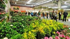 Verdi Passioni: un weekend all'insegna di piante e fiori