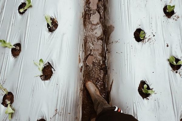 Preparazione orto: i solchi