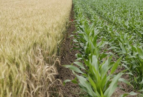 Preparazione dell'orto: suddivisione del terreno